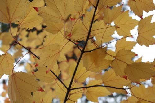 automne,lyon, berges