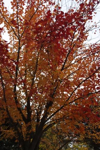 Lyon, couleurs, berges, automne
