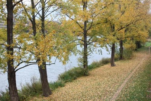 breges,couleurs, automne, Lyon